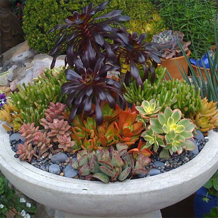 Landscaping cape town professional landscaping services for Easy to take care of outdoor plants