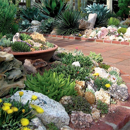 Landscaping cape town professional landscaping services for Easy care landscape plants