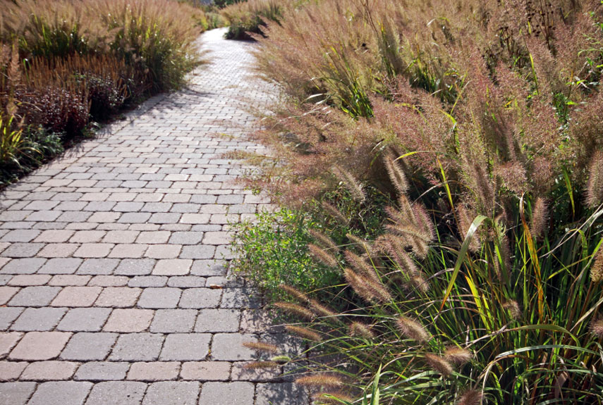When To Prune Ornamental Grasses Landscaping cape town professional landscaping services and pruning ornamental grasses workwithnaturefo