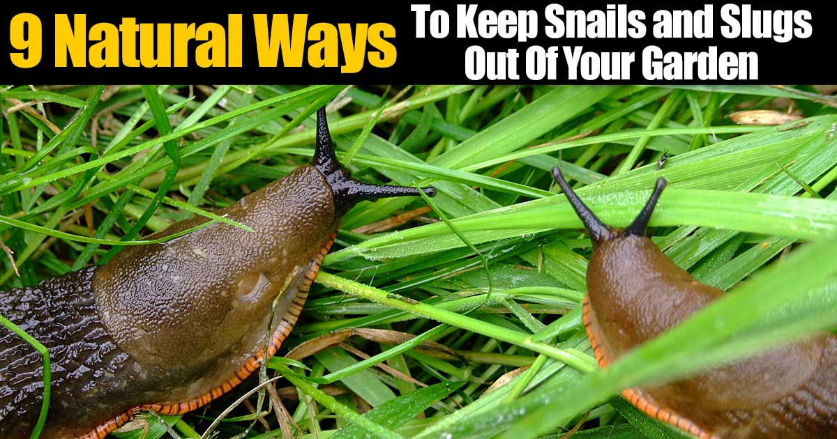 slugs and snails in your garden, get rid of them naturally