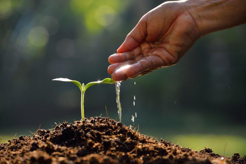 gardening-mistakes-3
