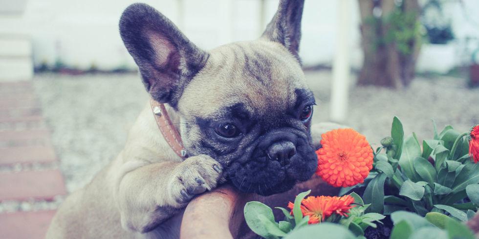 pet proof your garden