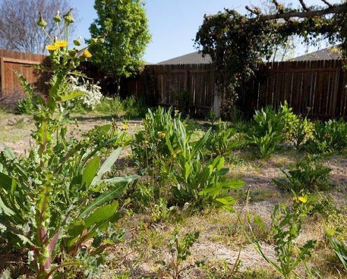 gardening fighting weeds
