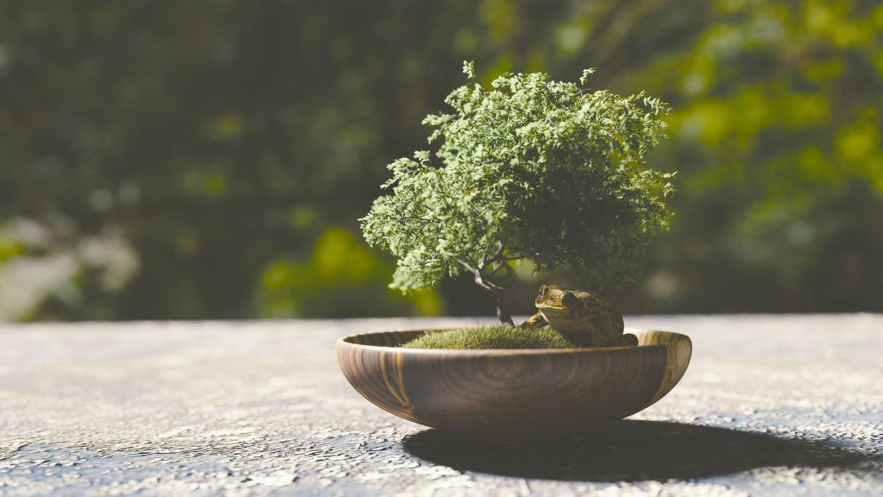 bonsai-1313531_1280