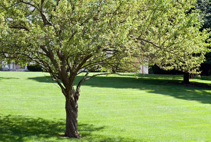 pruning deciduous trees and evergreens