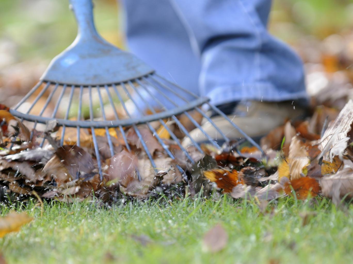 raking leaves
