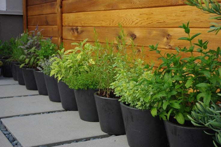 herb garden in containers