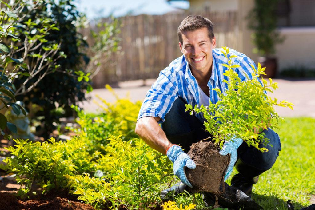 garden gardening tips for beginners